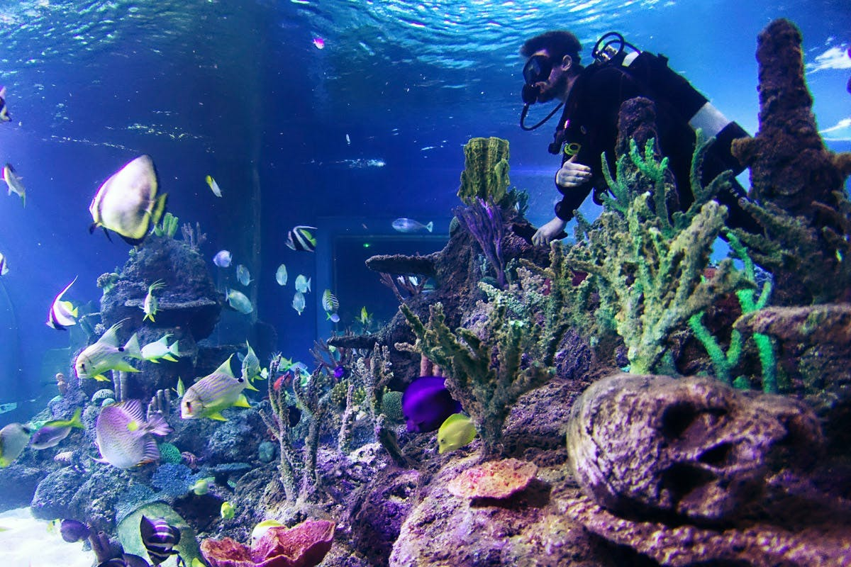 Dive with sharks bucket list birthday gifts with Virgin Experience Days