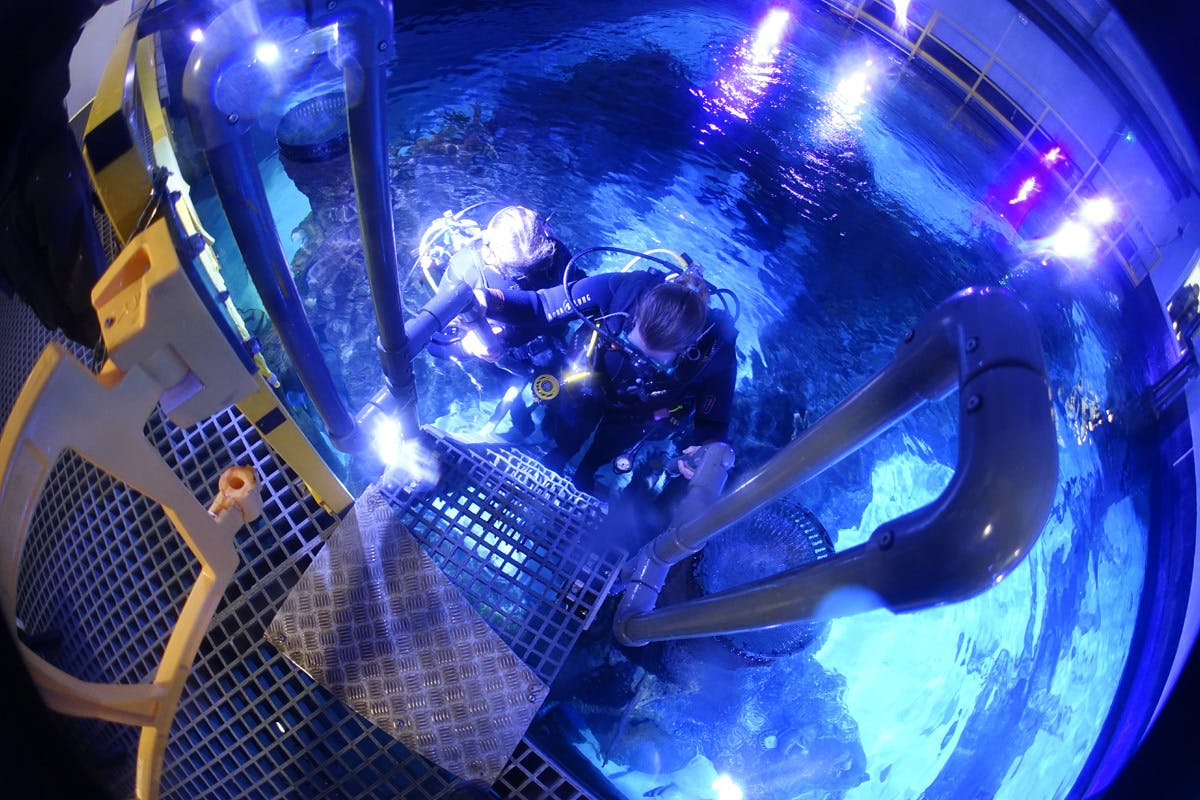 Diving with sharks bucket list experience with Virgin Experience Days