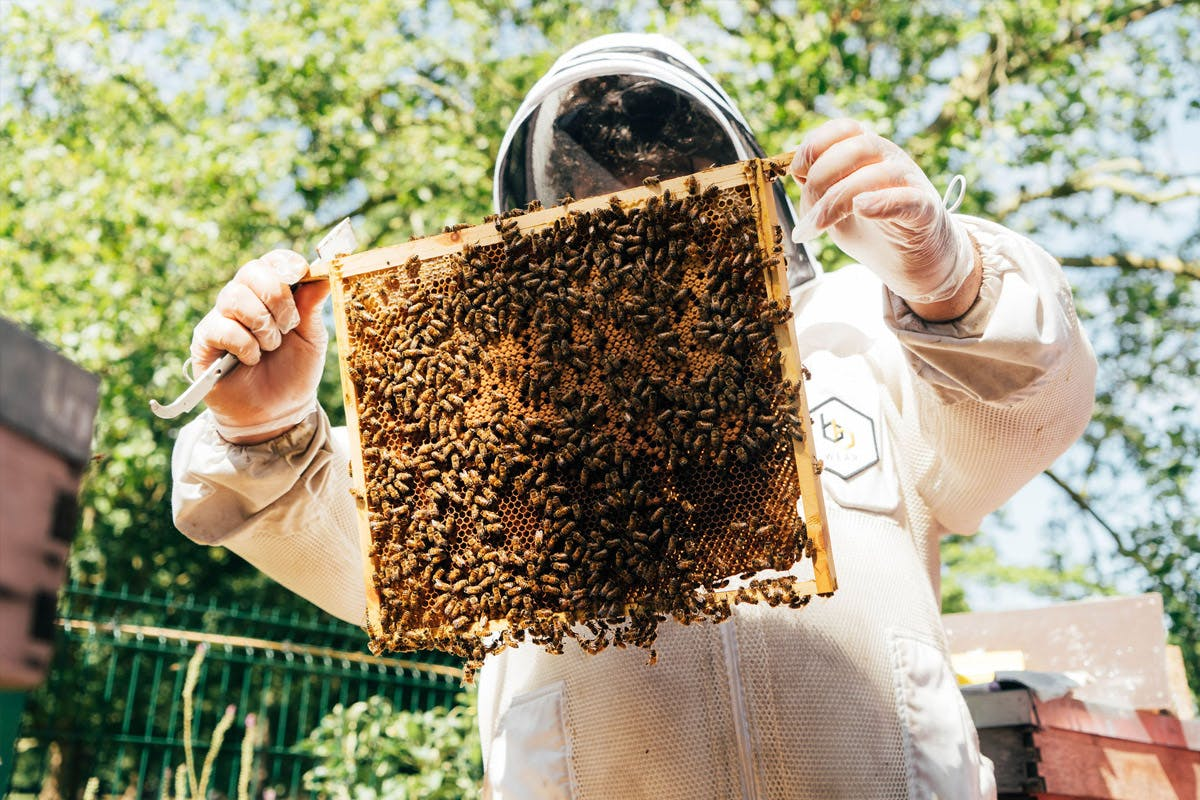 London sustainable beekeeping and beer tasting with Virgin Experience Days