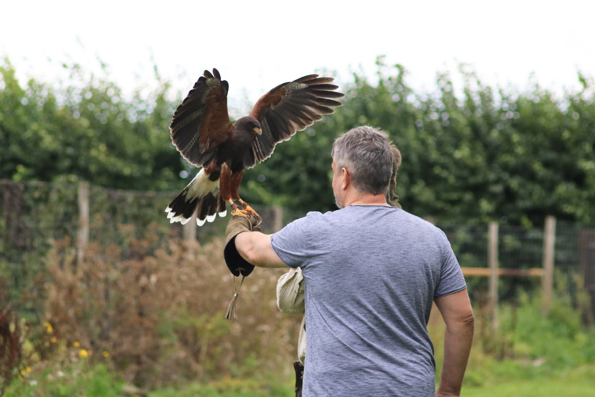 Falconry experience unusual gifts with Virgin Experience Days