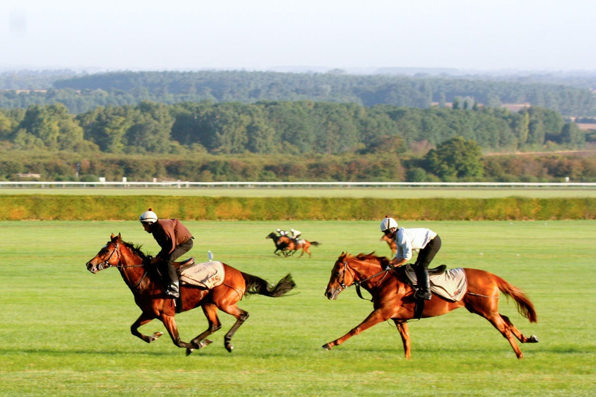 Ultimate Horse Racing Lover's Experience with Full Day Guided Tour for Two at Newmarket