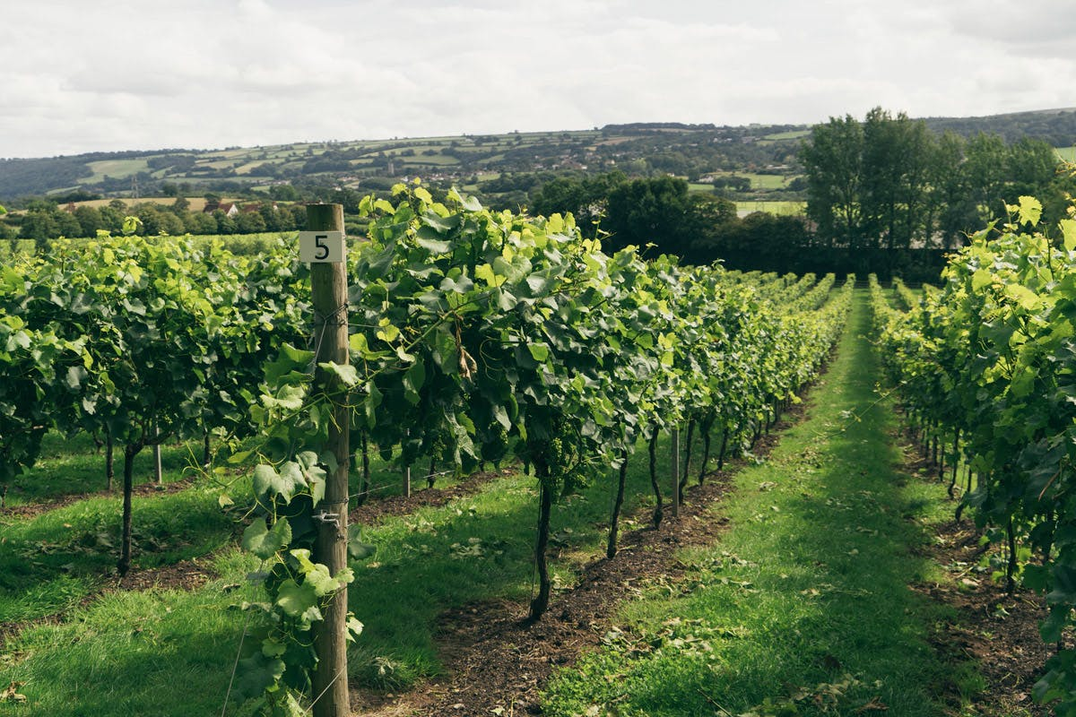 Vineyard tour Bristol wine tasting summer days out 2020 with Virgin Experience Days