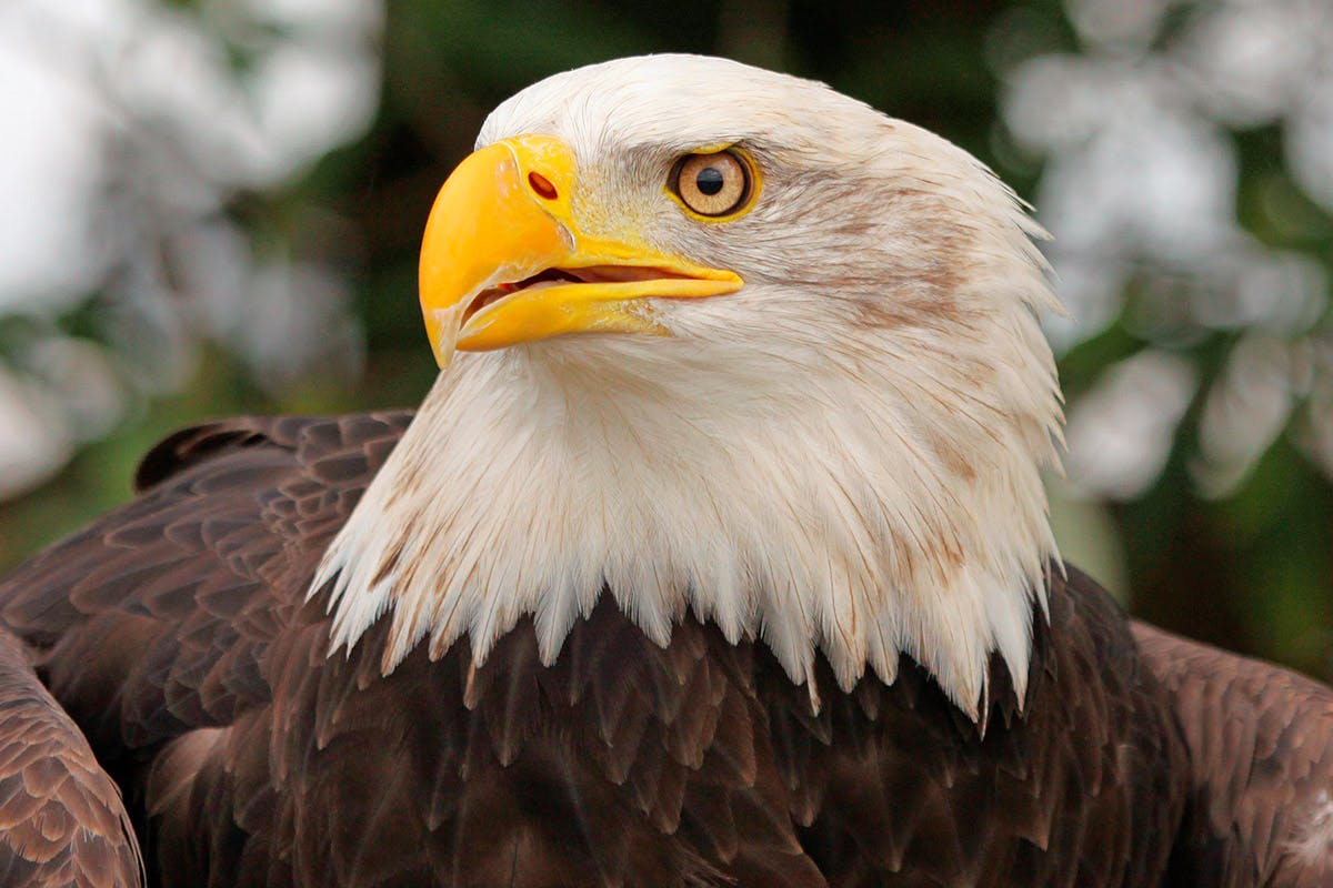 Introduction to Eagle Handling