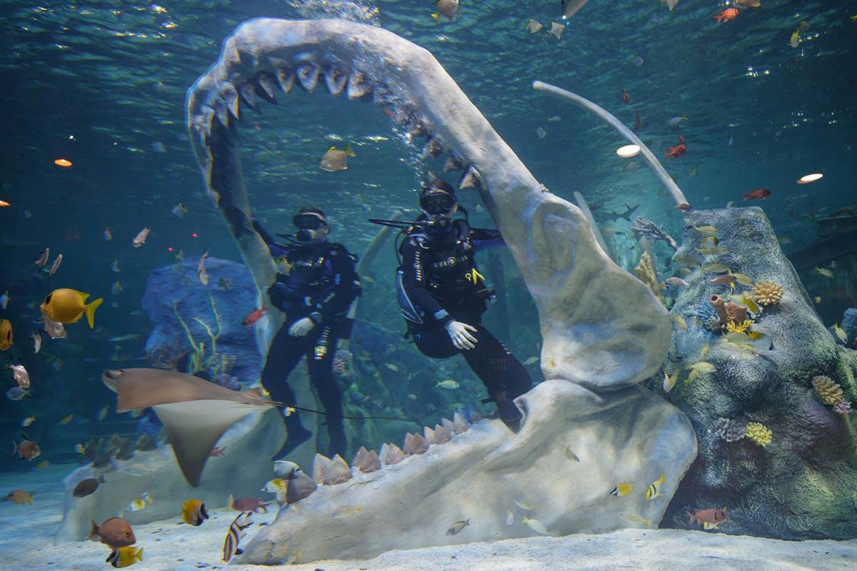 Bear Grylls Dive & Assault Course