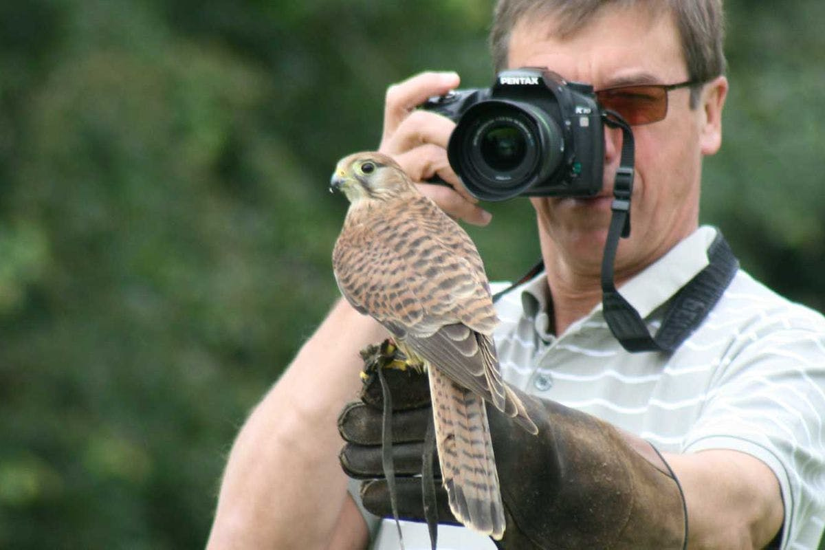 Full Day Wildlife Photography Experience at Millets Falconry Centre
