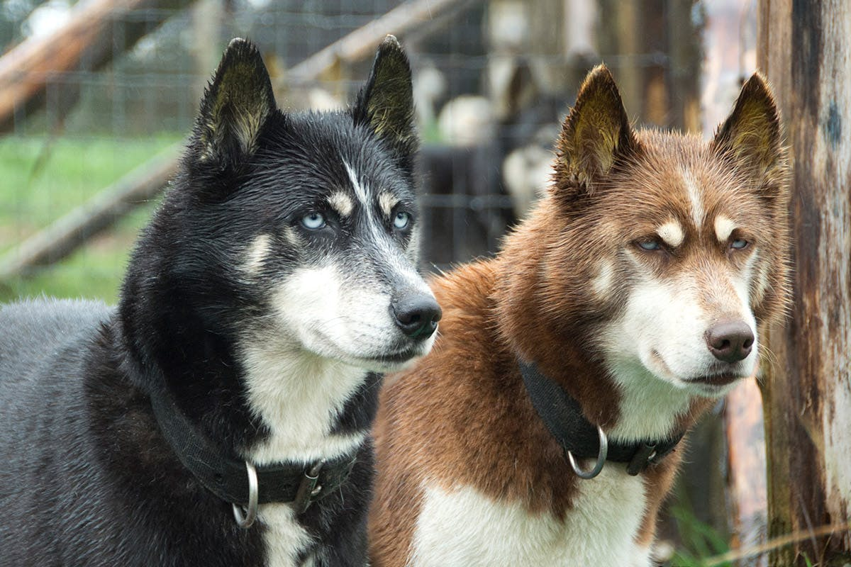 Hike with Huskies and Entry to Eagle Heights Wildlife Foundation for Two