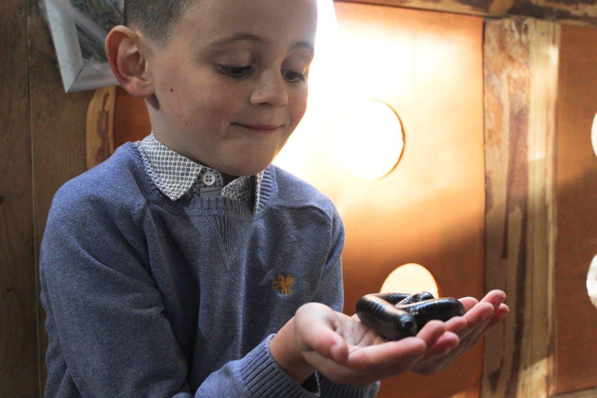 Junior Big Bug Encounter at Hemsley Conservation Centre