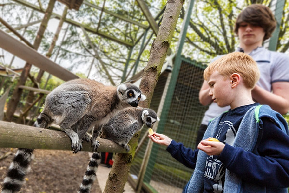 Junior Half Day Keeper Experience with Day Admission for Two at Hoo Farm Animal Kingdom
