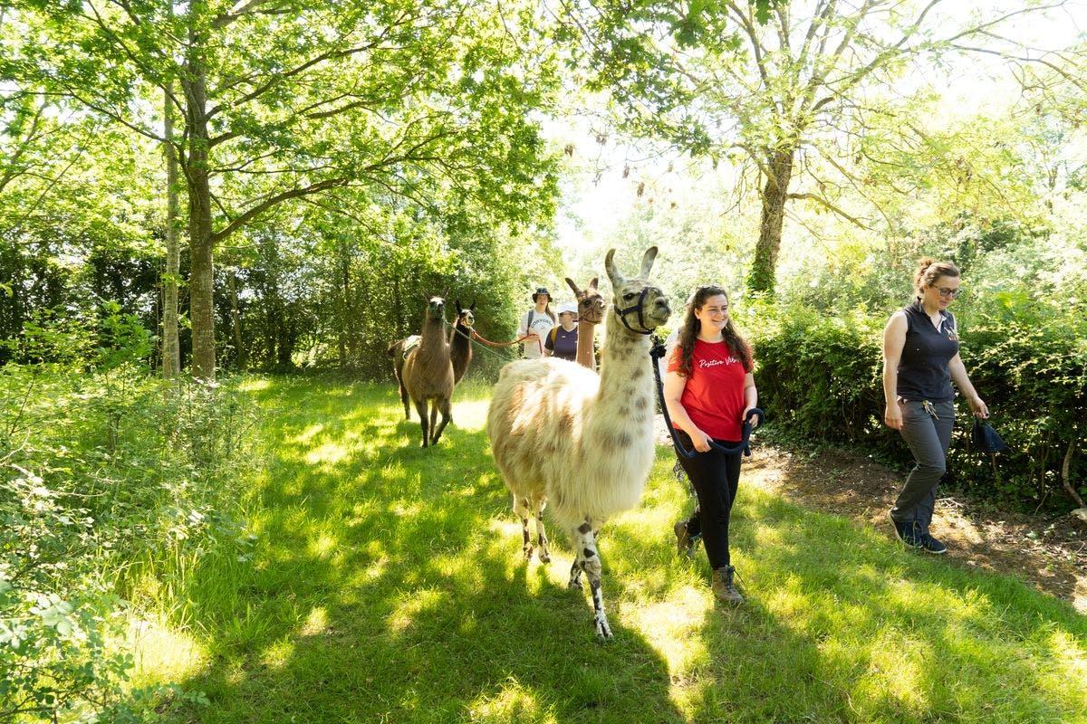 Llama Trekking for Two