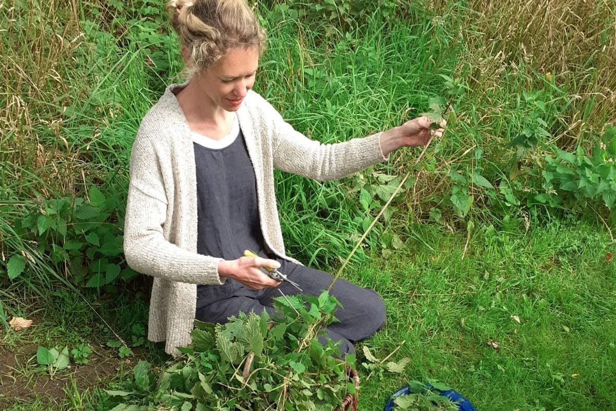 Make Your Own Natural Skincare Products from a Wildflower Meadow