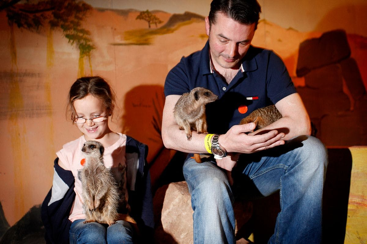 Meerkat Encounter with Day Admission for Two at Hoo Farm Animal Kingdom