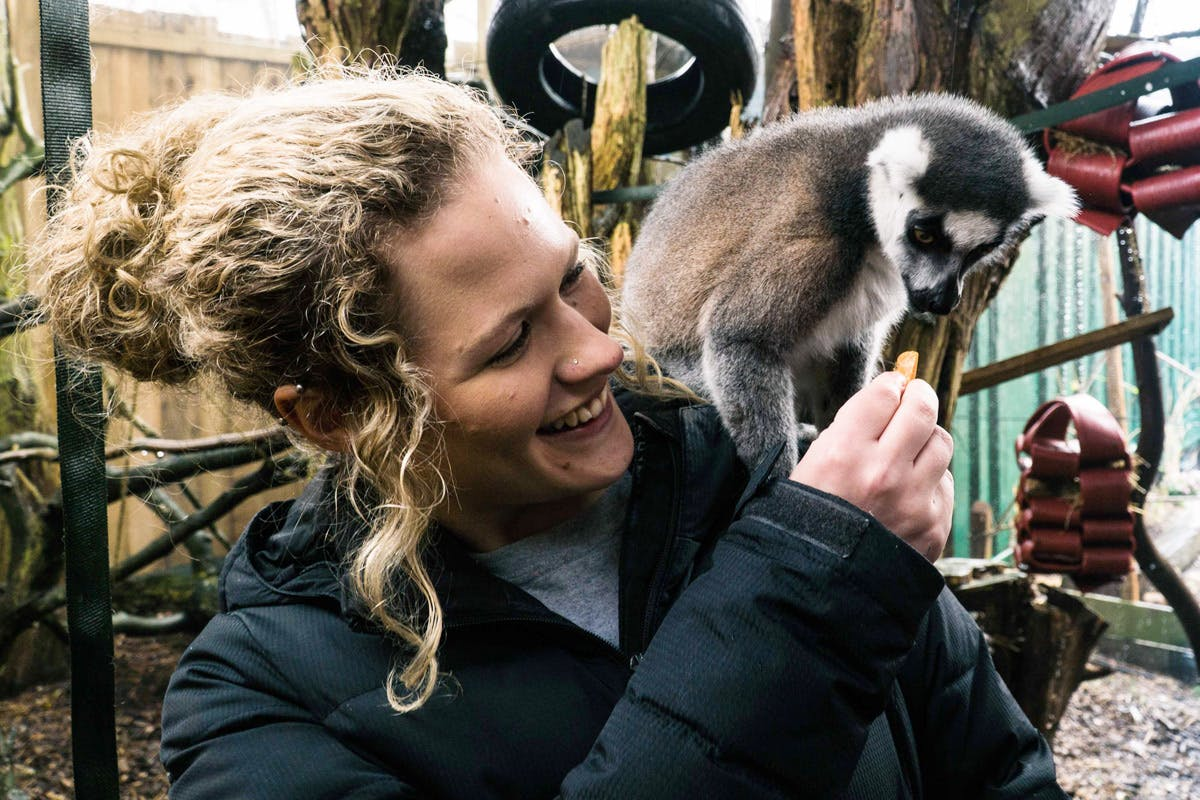 Meet the Lemurs at Hemsley Conservation Centre