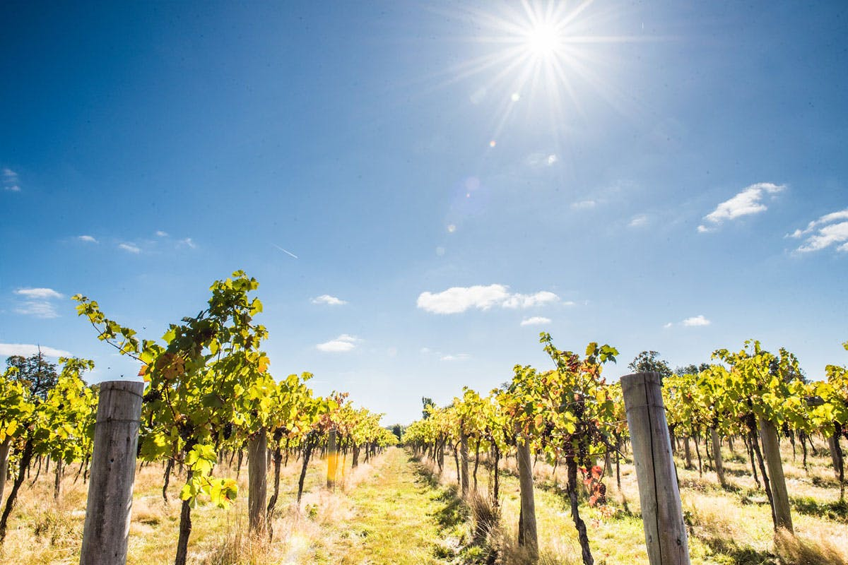 One Night Berkshire Break with Wine, Dinner and Vineyard Tour with Tastings at Stanlake Park Wine Estate for Two