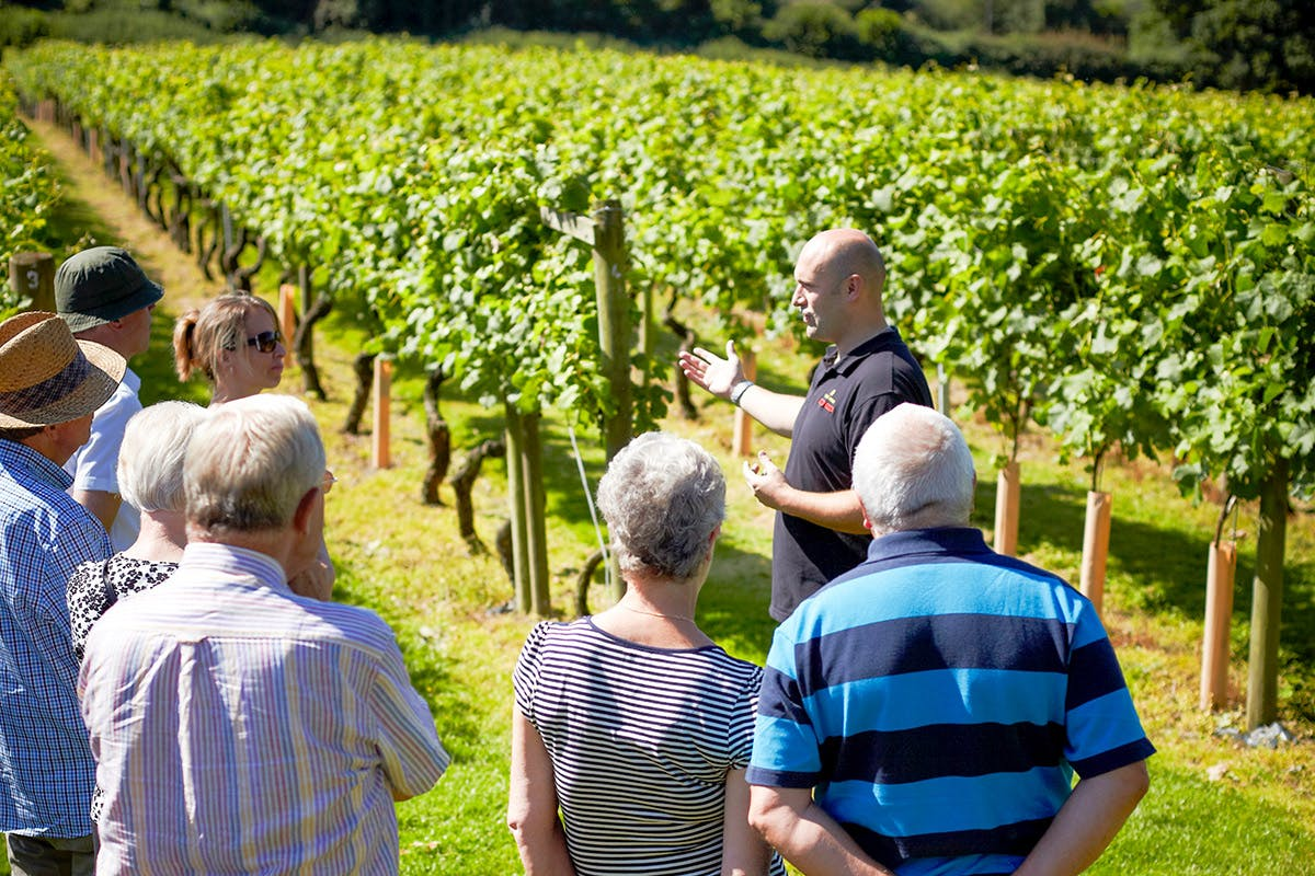 One Night Countryside Break with Vineyard Tour and Wine Tasting at Chapel Down Winery for Two