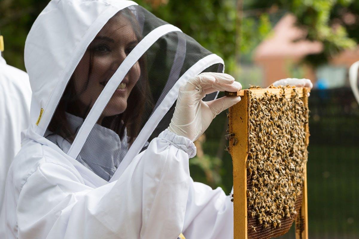 Rural Beekeeping and Honey Craft Beer Tasting