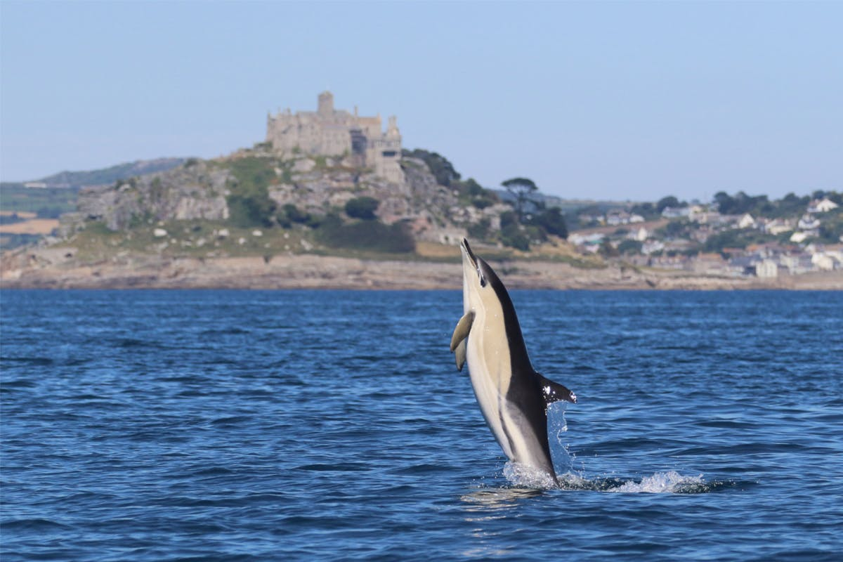 Seal and Dolphin Watching in Cornwall for Two