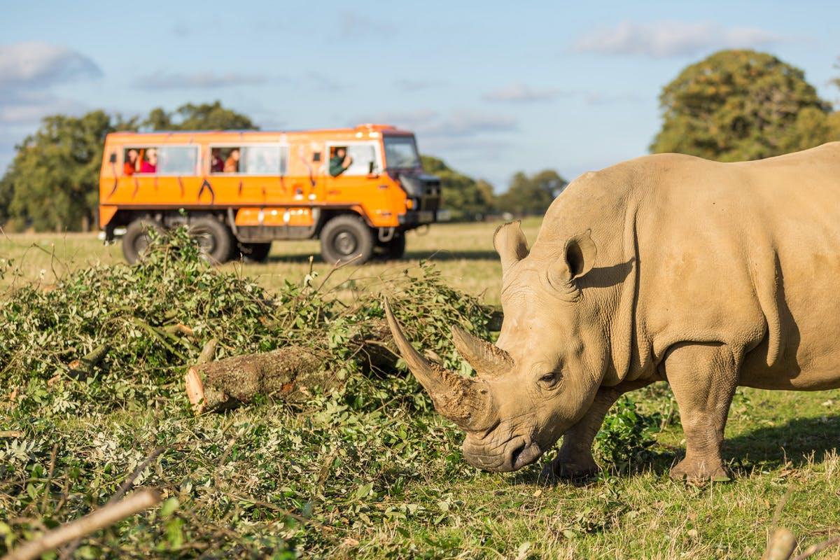 Up-Close Rhino Encounter at Woburn Safari Park