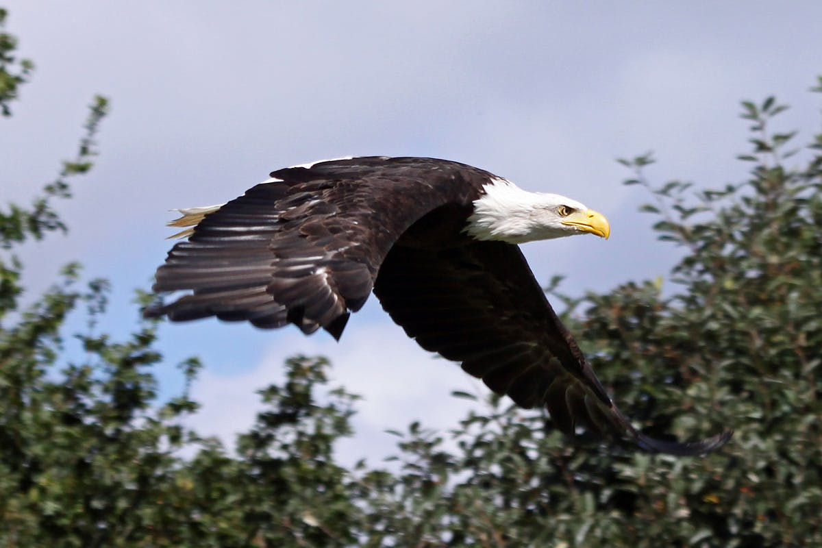 Visit to Eagle Heights the UK's Largest Bird of Prey Centre with Afternoon Tea for Two