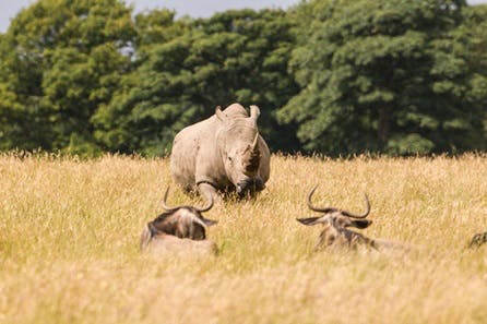 Knowsley Safari Park Family Ticket