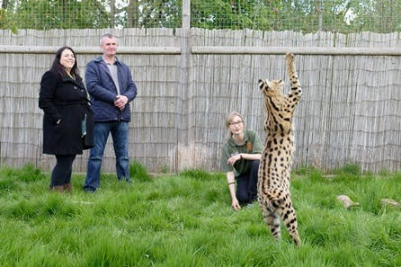 Big Cat Encounter - Weekends