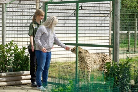 Big Cat Ranger for a Day - Weekends