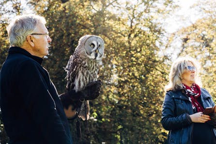 Introduction to Owl Handling for Two