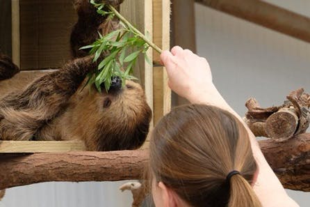 Junior Keeper Experience with Lunch and Day Admission to South Lakes Safari Zoo