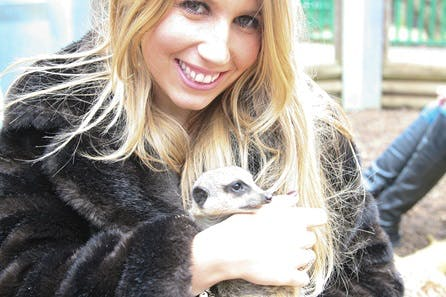 Meet the Meerkats for Two