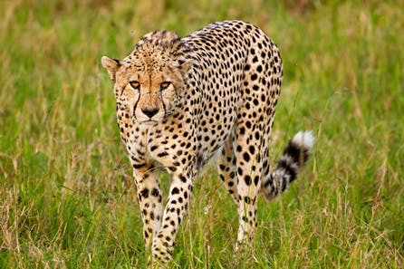 Online Wildlife Photography Course