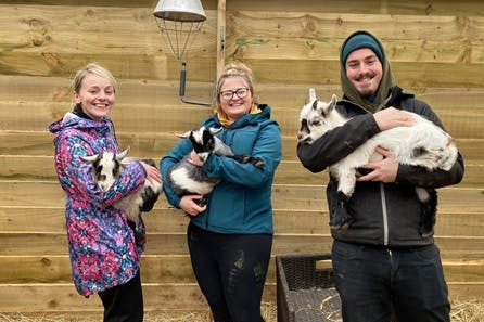 Pygmy Goat Play for Two