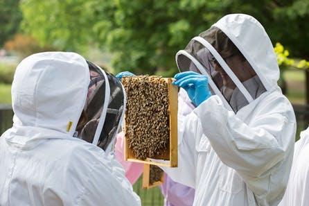 Rural Beekeeping and Honey Craft Beer Tasting for Two
