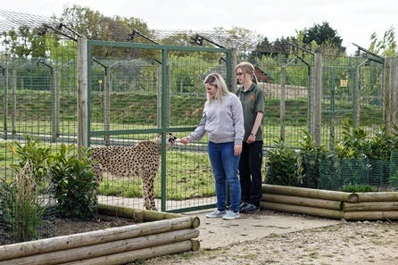 Luxury Lodge Stay with Dining and Hand Feeding Experience for Two at The Big Cat Sanctuary