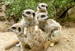 Animal Encounter at Drusillas Park