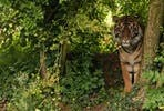 Big Cat Hand Feeding Experience with Day Admission at South Lakes Safari Zoo