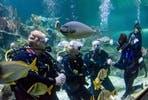 Weekday Dive with Sharks at Skegness Aquarium