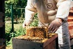 London Beekeeping and Craft Beer Tasting