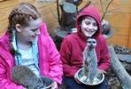 Meet the Meekats at Hemsley Conservation Centre